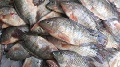 صورة اسعار السمك اليوم
